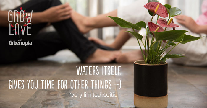 This Handmade Planter Will Water Your Plant On Its Own  #growlove #valentinesgift