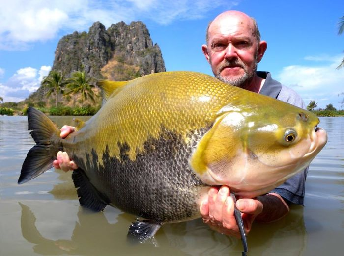 This Secret Lake In Thailand Has Got Worlds Biggest Fish In It