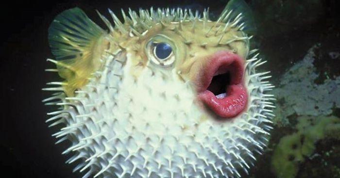Weird Fish Lips 11