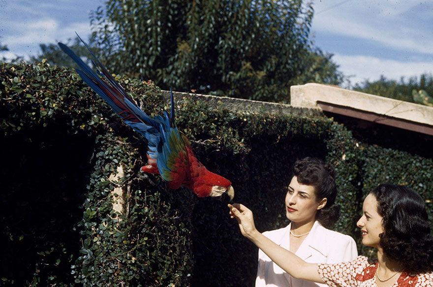 Two Women Give Food To A Red And Green Macaw In A City Garden In Brazil, 1944