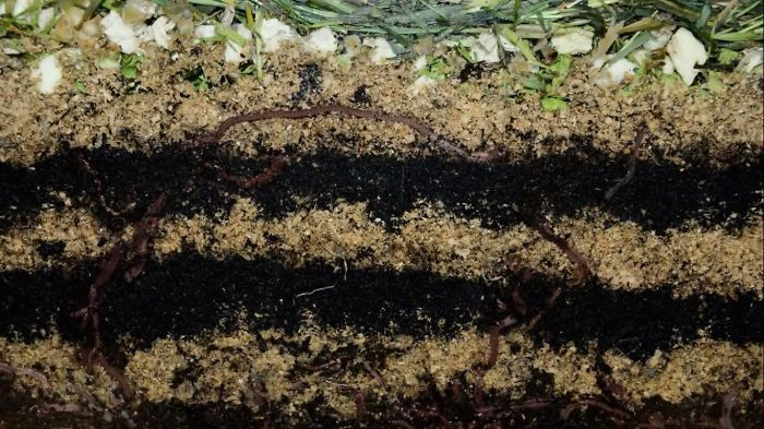We Made A 20 Days Time-lapse Video Of Worms Making Compost