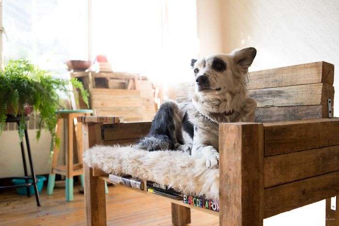 We Make Furniture For Pets Because We Love Animals, Design And Each Other