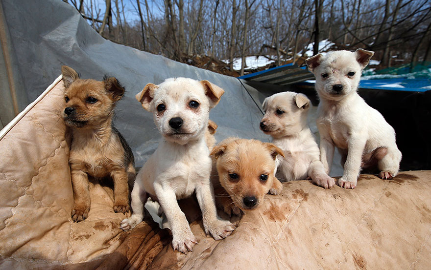 woman-saves-200-dogs-rescue-jung-myoung-sook-south-korea-4