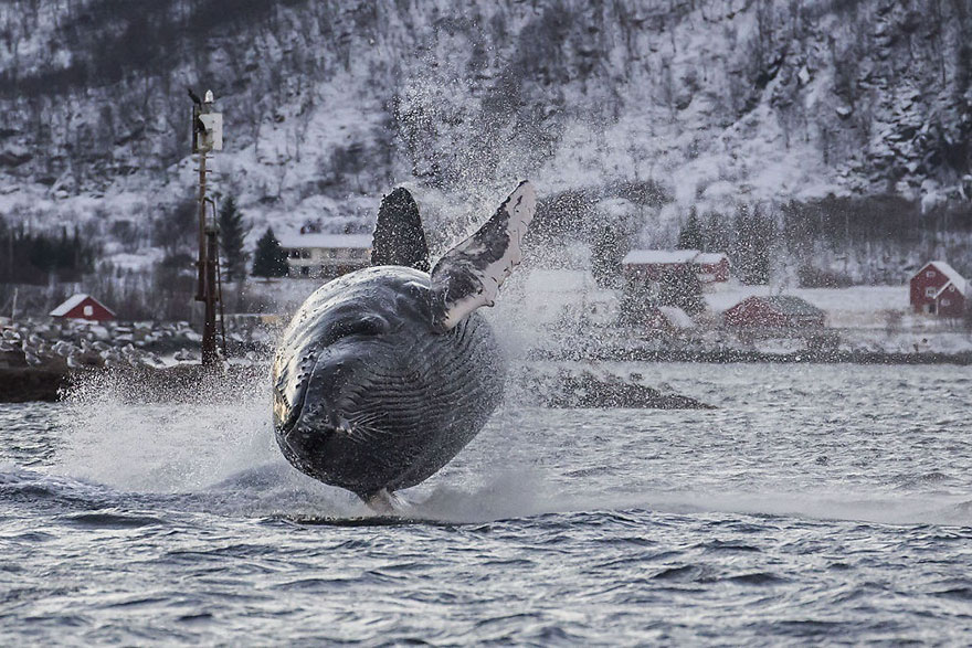 Nature Photographer Gets An Amazing Shot Of A Humpback Whale