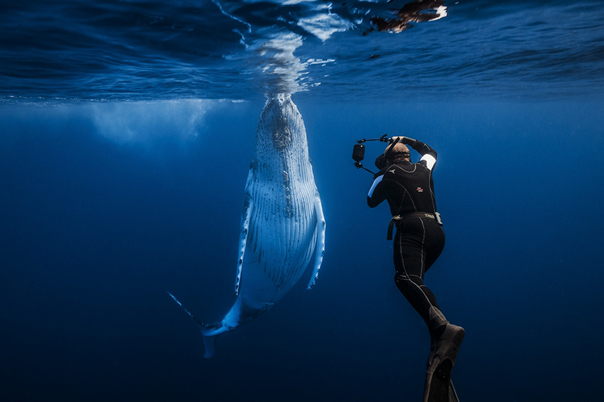 Humpback Whale With Underwater Photographer