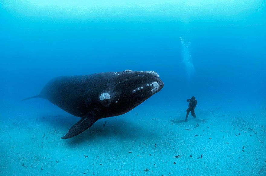 Whale And Man Meet