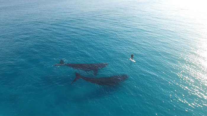 Paddle Boarding With Whales In Esperance, Western Australia