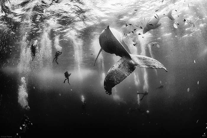 72 Majestic Whale Photos To Celebrate World Whale Day