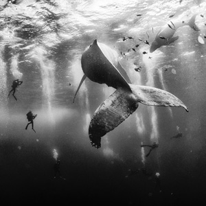 15+ Majestic Whale Photos To Celebrate World Whale Day
