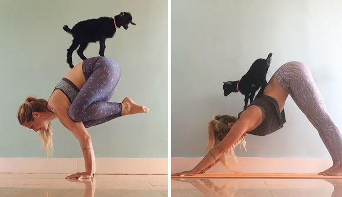 Yoga Girl And Her Goat Are The Most Adorable Yoga Partners Ever