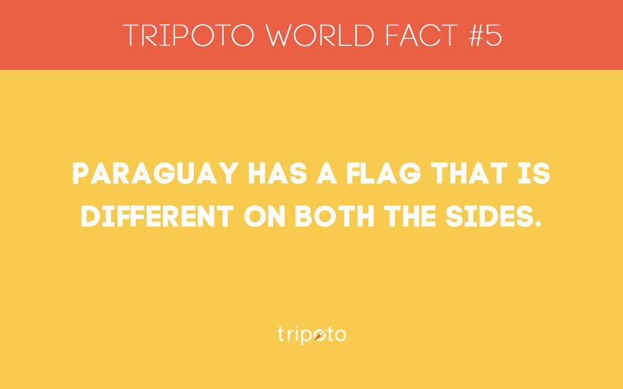 #5 Fact