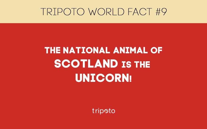 #9 Fact