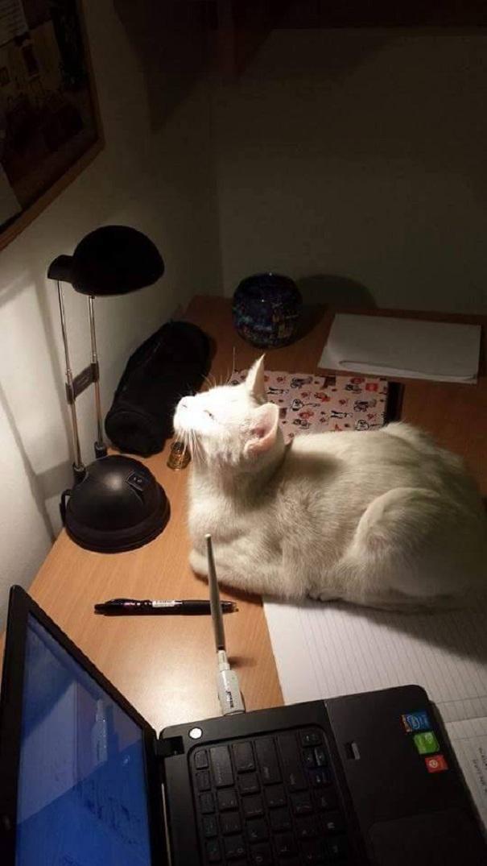 Lydia, The Enlightened Cat