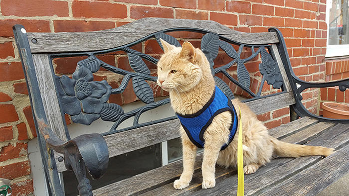 21-year-old-cat-adopted-kidney-failure-tumor-tigger-adriene-buisch-26