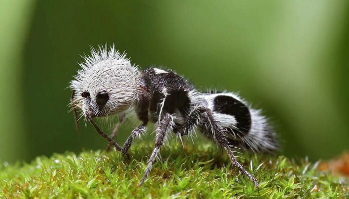 5 Most Strangest Animals And Insects