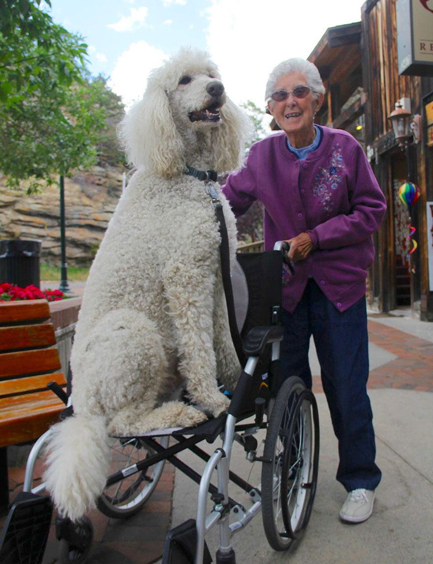 90-year-old-woman-cancer-road-trip-dog-miss-norma-23