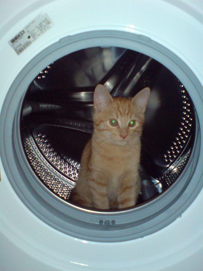 My House, My Washing Cat-chine!