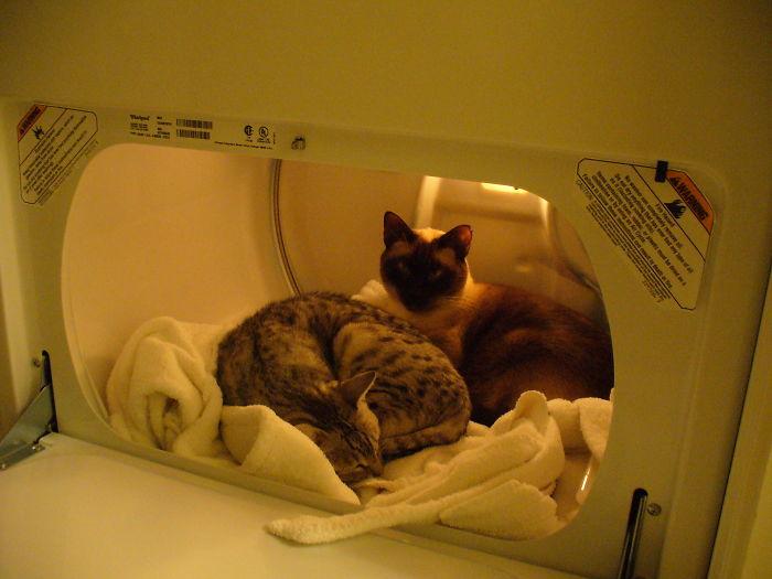 Warm Dryer