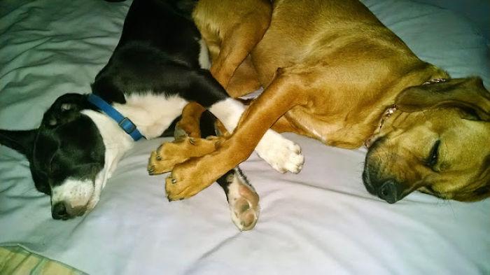 Sleeping Cuties. My Dogs, Carson & Savannah.