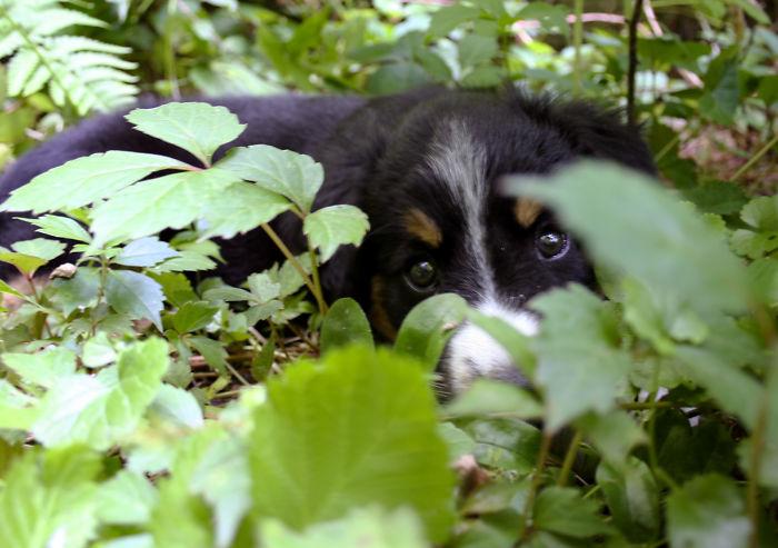 Little Penny Play Hide And Seek
