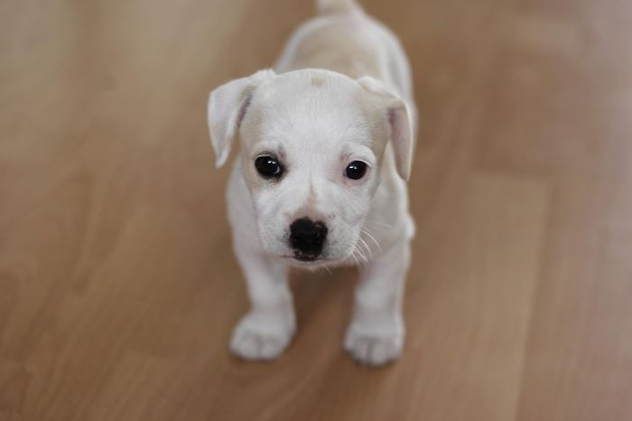 Baby Puppy!