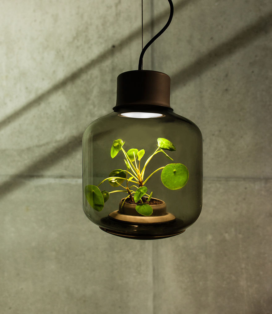 Lamps that grow plants without direct sunlight or water