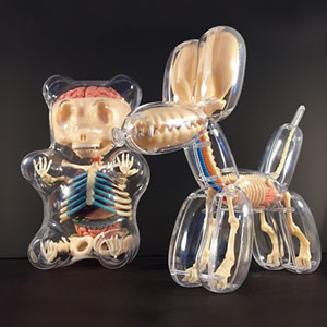 Anatomical Animal Balloons By Jason Freeny