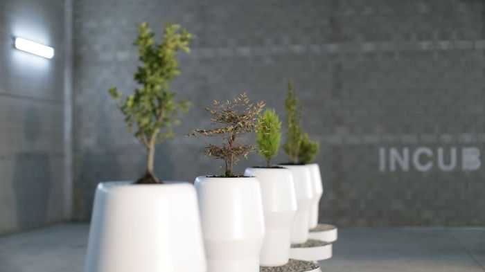 Growing Trees In The Bios Incubes