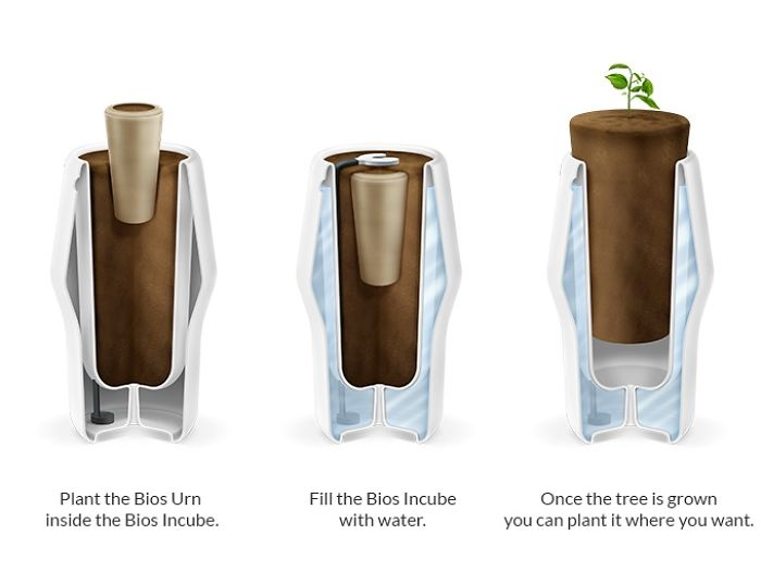 How To Use The Bios Incube To Grow A Tree With The Bios Urn