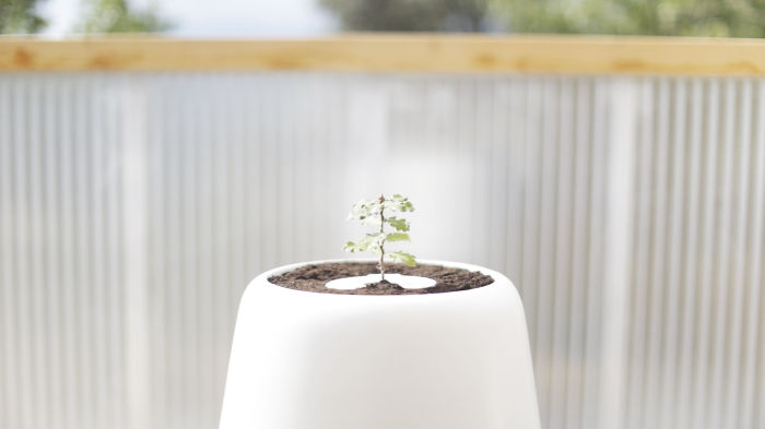 The Sensor Sits On Top Of The Soil.