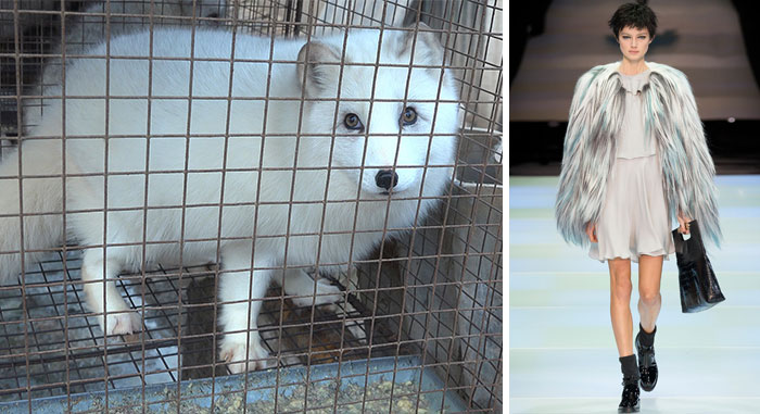 Armani Announces That It Will Stop Using Animal Fur From Now On