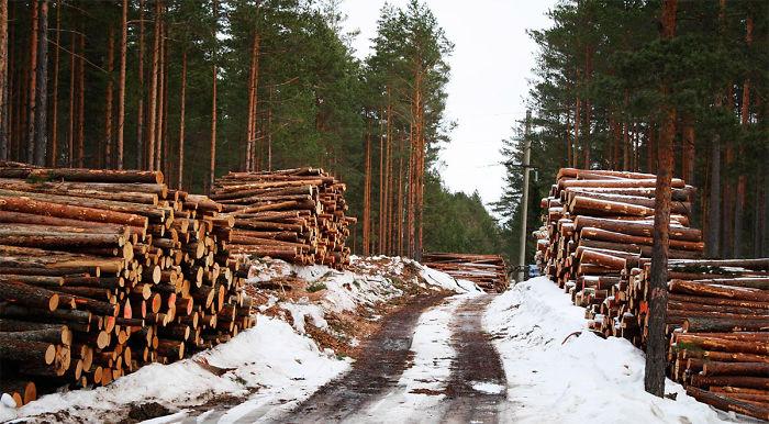 Automatic Woodwork – Cemetery Of Logs. Bonus: Huge Pencil Sharpener