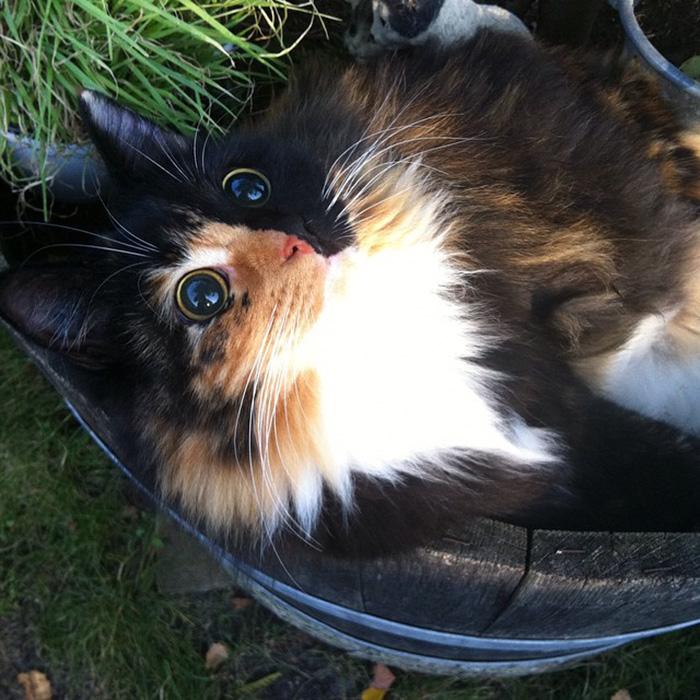 blind-cat-chimera-calico-jasmine-sandra-coudray-3