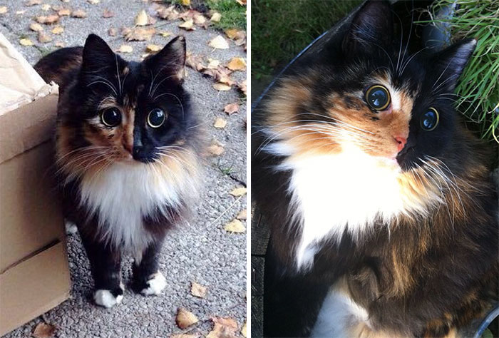 This Blind Kitty Found On The Street Has Eyes No One Could Resist