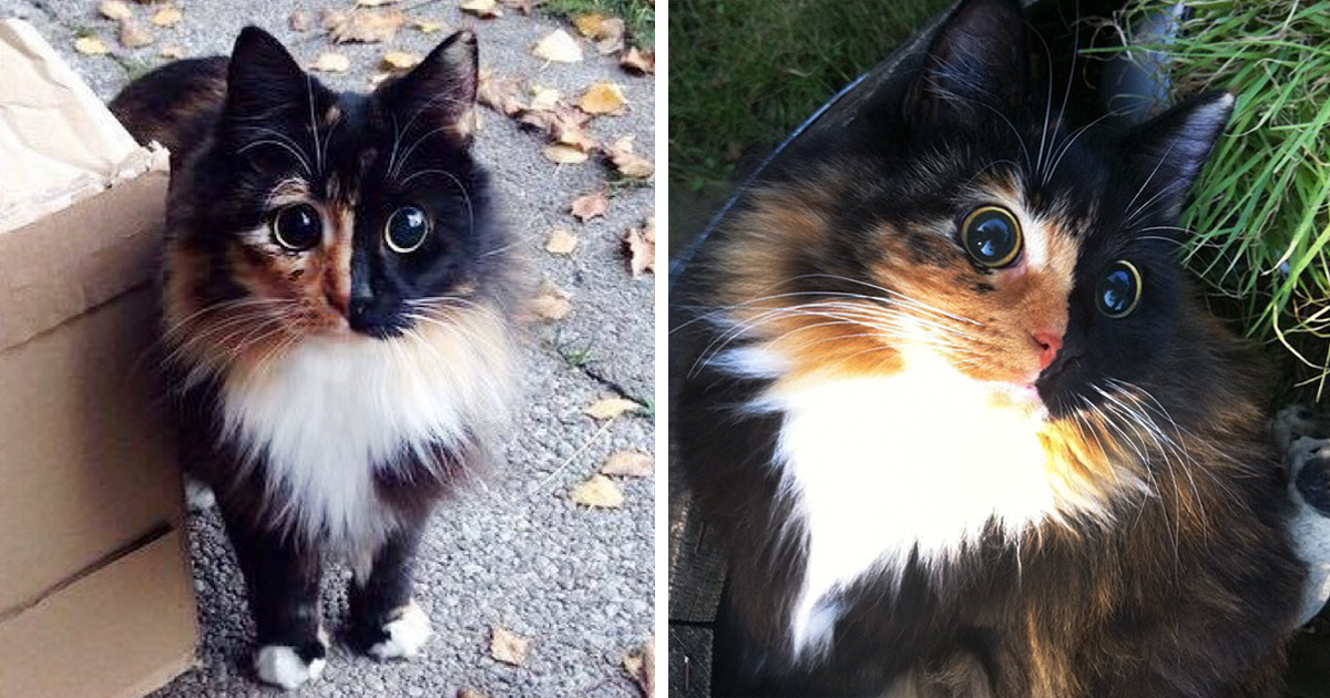 This Blind Kitty Found On The Street Has Eyes No One Could Resist Bored Panda