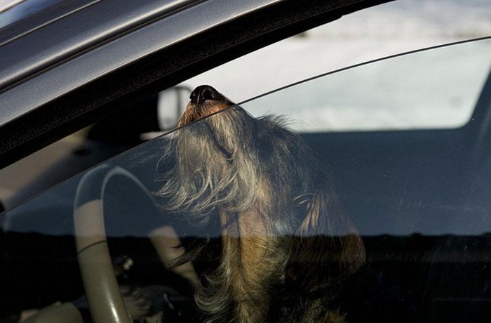 break-car-windows-rescue-dogs-heat-florida-law-6