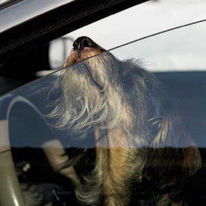 Smashing Car Windows Is Now Legal In Florida To Save Pets