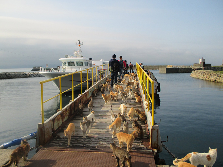 cat-island-japan-tweet-food-donation-aoshima-17