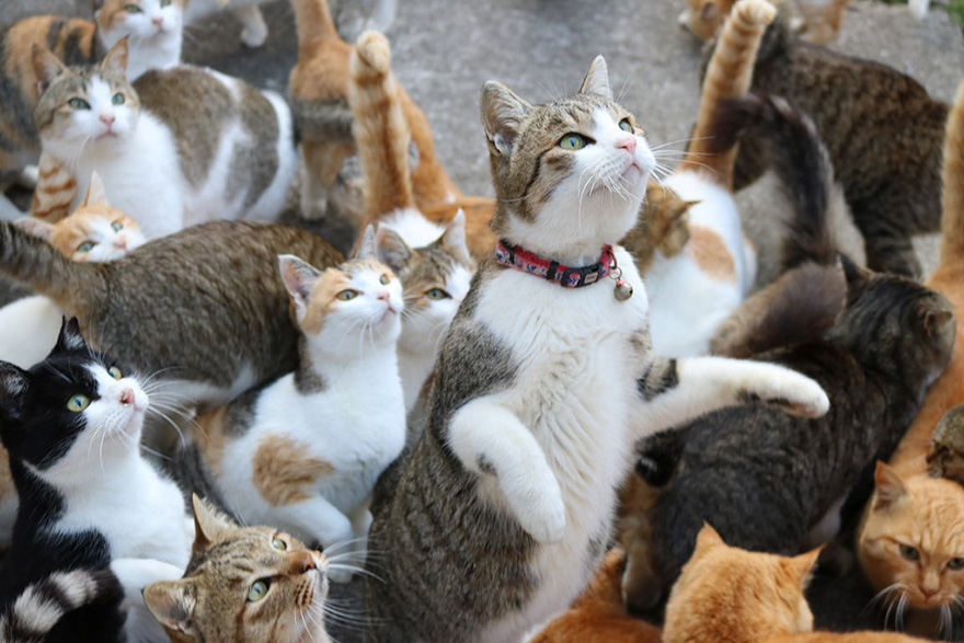 cat-island-japan-tweet-food-donation-aoshima-19