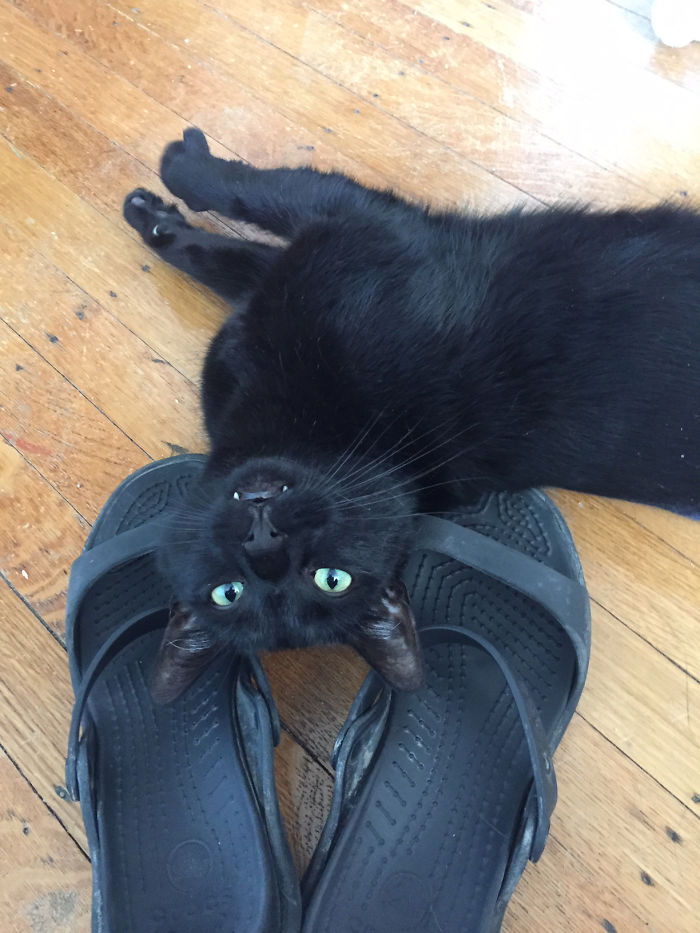 Schrodinger Likes To Sleep In Shoes