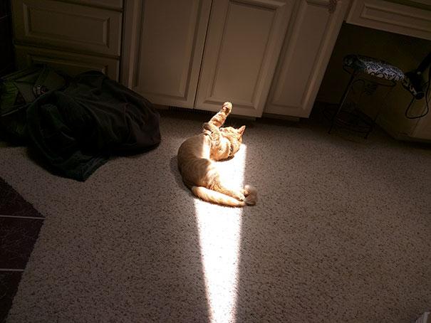 Cat Stretch In The Sun