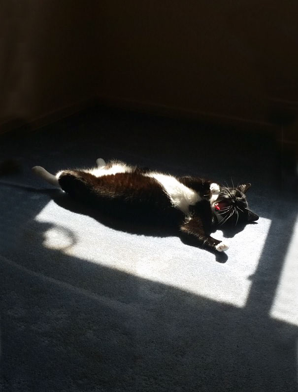My Cat Sleeps Just Like Me. In The Sun, On My Back, With My Mouth Wide Open. Make's Me Proud