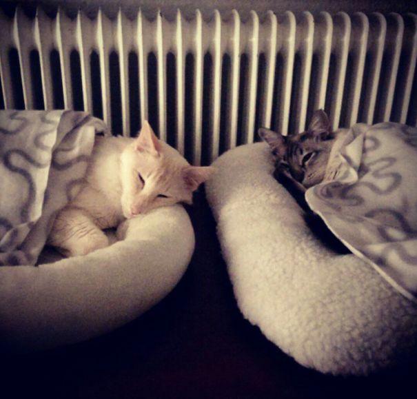 Kimmo & Liisa