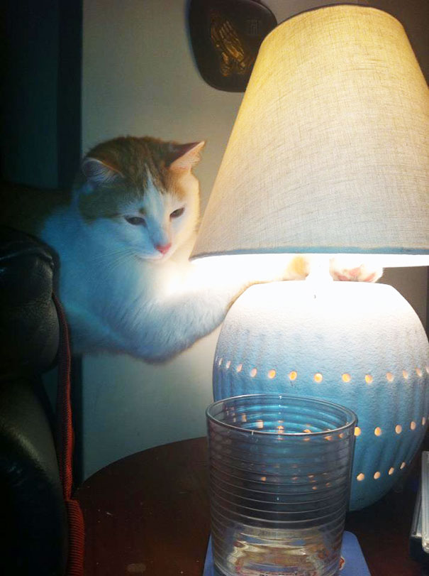 My Cat Comes In From The Cold And Puts Her Paws On The Lamp To Warm Them Up