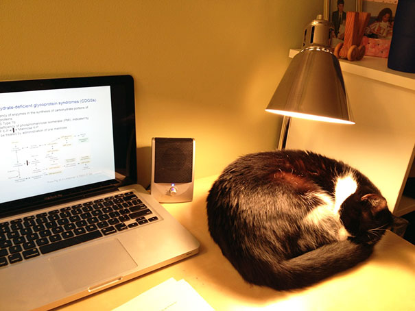 "Installation Of A Heating Lamp Always Rectifies The ""cat On Keyboard"" Syndrome"