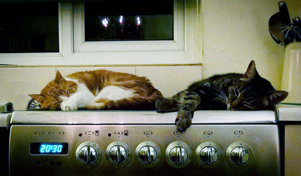 Ginger And Sybil On The Cooker, As It Cooled Down After Supper