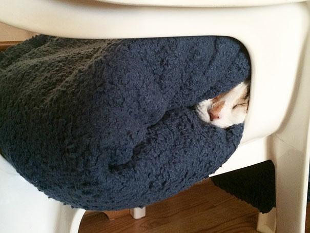 Warm Cat Is Still Warm
