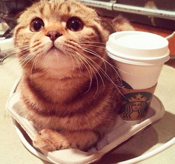 My Cat Likes Warm Coffee