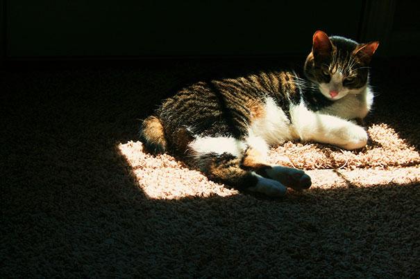 Toasty Warm Cat