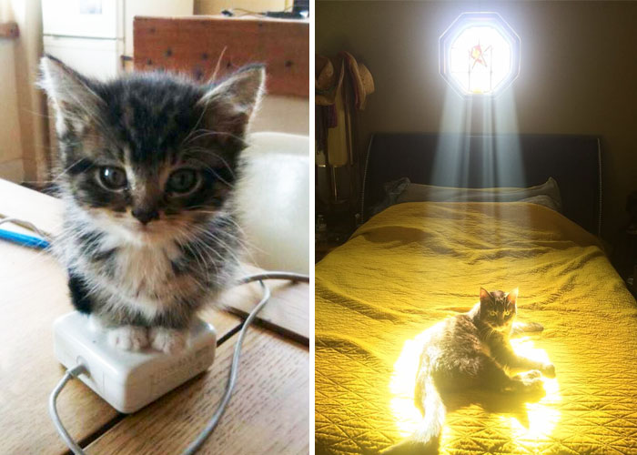 204 Cats Who Love Warmth More Than Anything